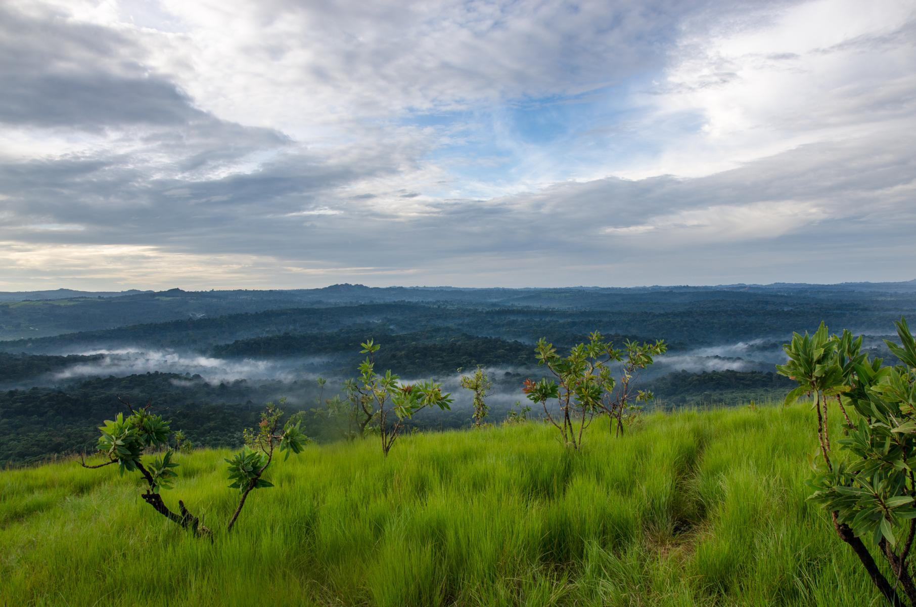 View Over The Kakamega Forest