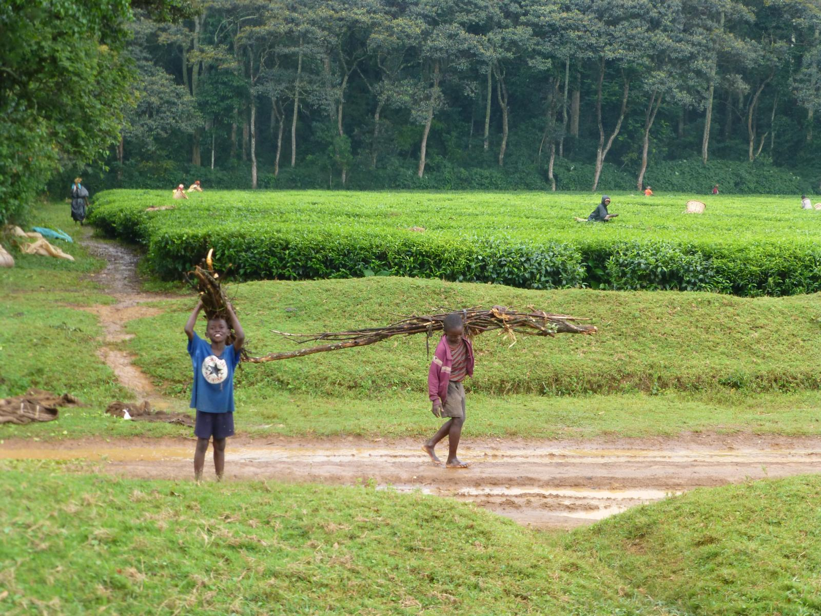 Children Collecting Fuel Wood For Cooking