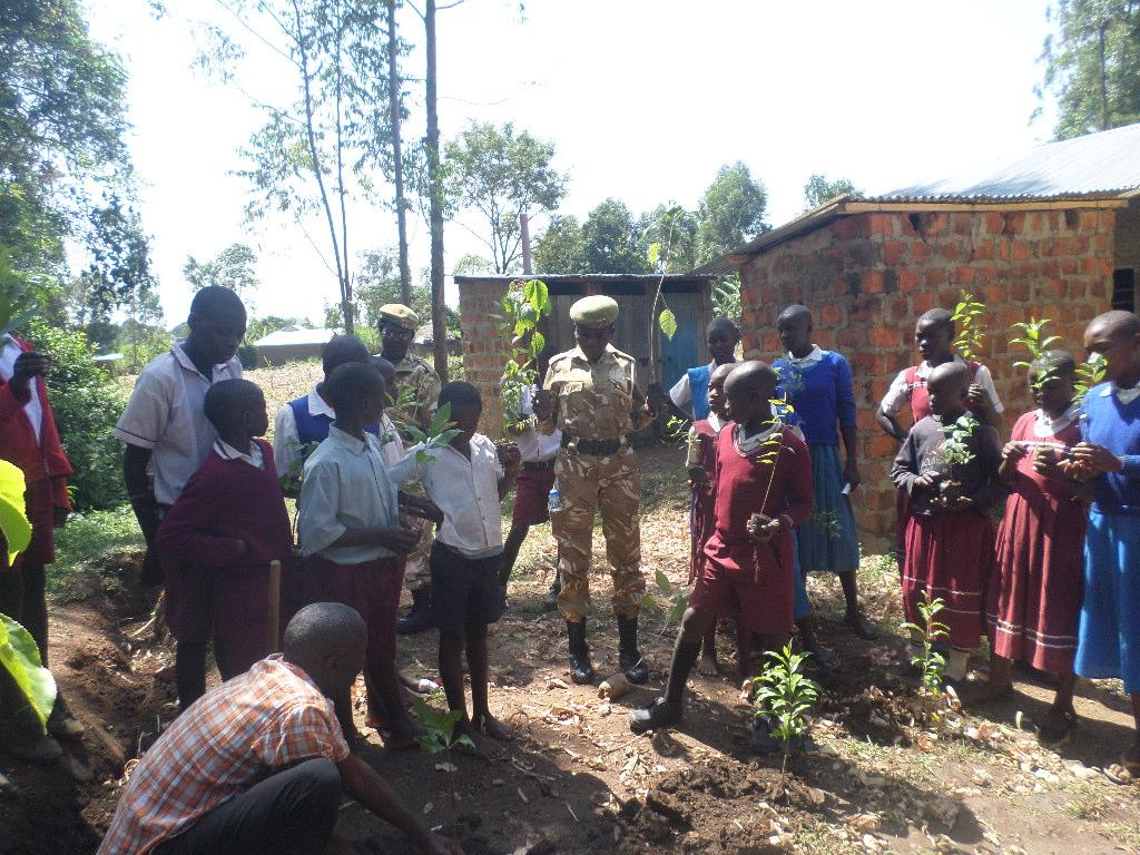 Planting Of New Tree Seedlings