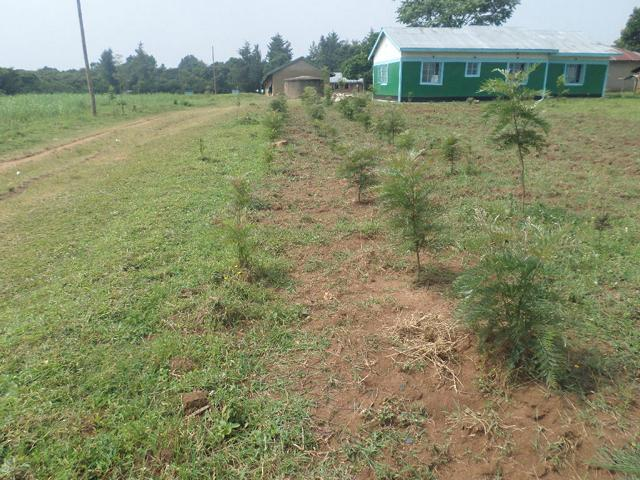 School Tree Plot For Future Fuelwood Consumption